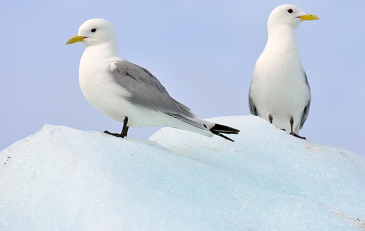 Bagaimana Burung-burung Antartika Mencari Mangsa?