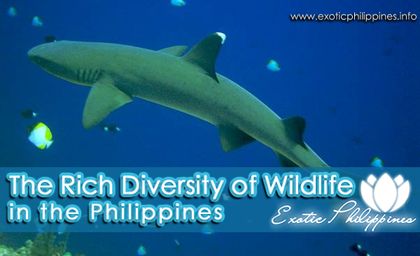 Wildlife in The Philippines