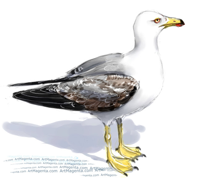 Yellow-legged gull sketch painting. Bird art drawing by illustrator Artmagenta
