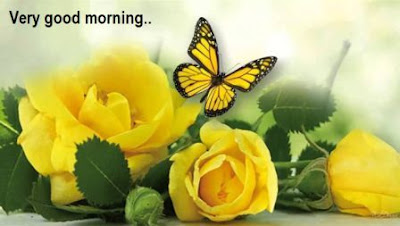 good morning romantic yellow rose images