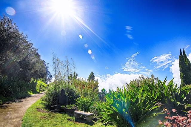 Ali'i Kula Lavender path