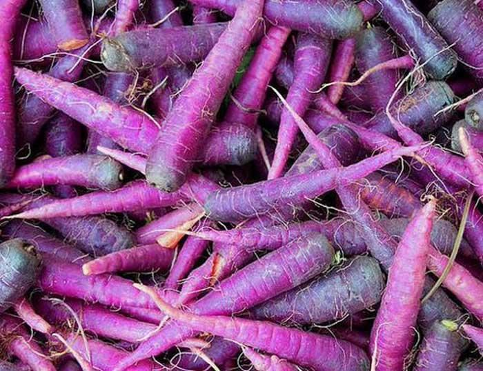 carrots were originally purple