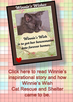 Winnie's Wish Cat Rescue and Shelter