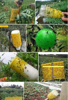 jual lem lalat buah, harga metilat lem