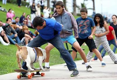 Otto, el perro que anda en patineta