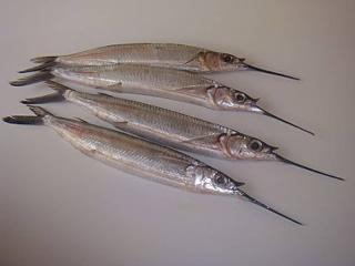 Foto de varios peixe agulha