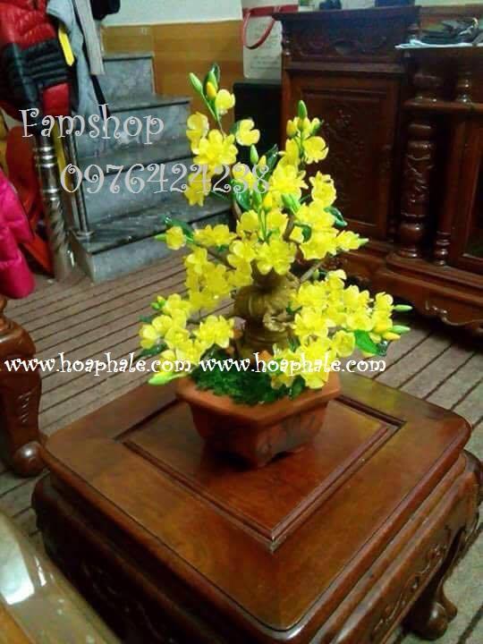 Goc bonsai cay hoa mai tai Nghia Tan