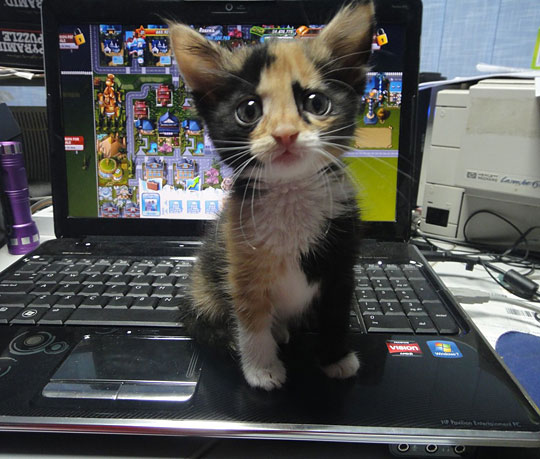 please please love me and not the computer%2521