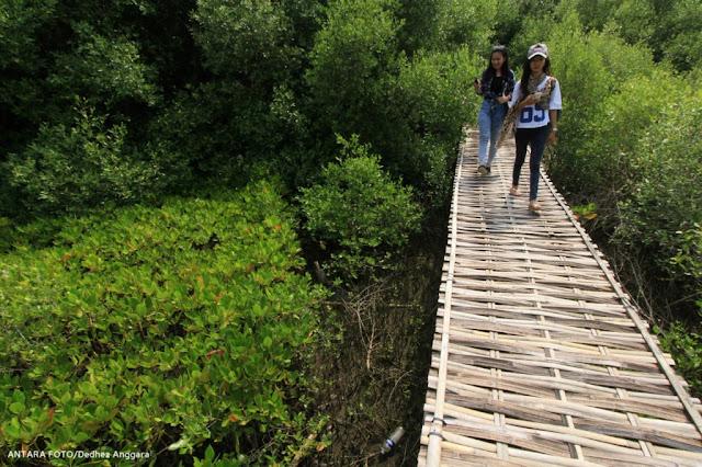 Kawasan-Wisata-Hutan-Mangrove-Saat-Ini-Menjadi-Obyek-Wisata-Populer-Di-Indramayu