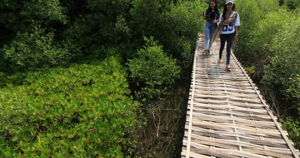 Kawasan Wisata Hutan Mangrove Saat Ini Menjadi Obyek Wisata Populer Di Indramayu