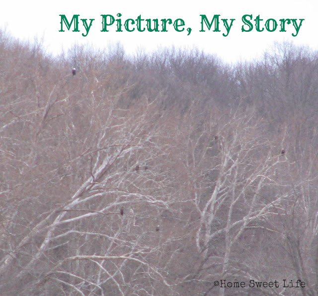 My picture my story, eagles, eagle watching, family trips