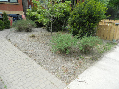 Leslieville Toronto summer garden cleanup after by Paul Jung Gardening Services