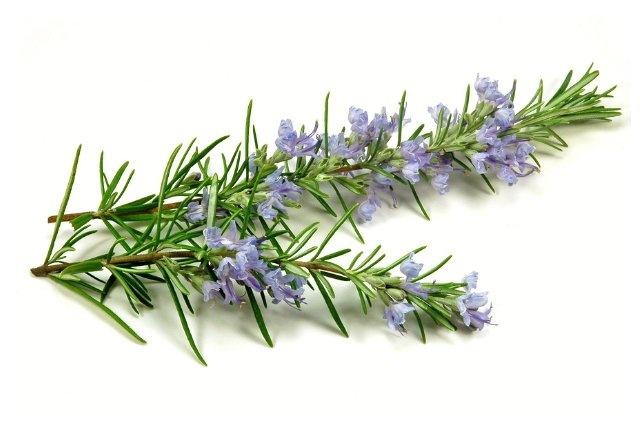 Dầu hương thảo là loại tinh dầu cực kỳ hiệu quả trong việc điều trị nếp nhăn dưới mắt