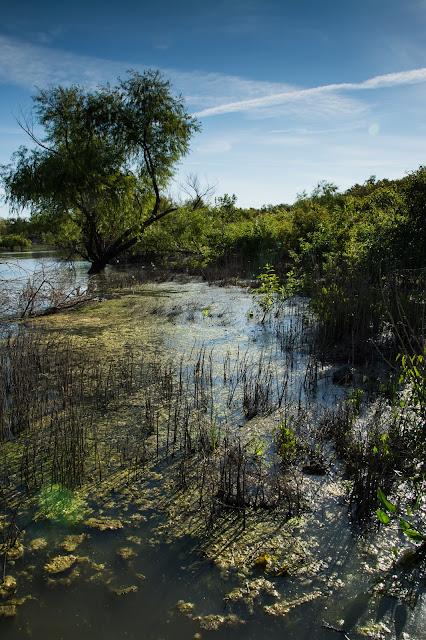 Bittern Marsh Trail, LLELA