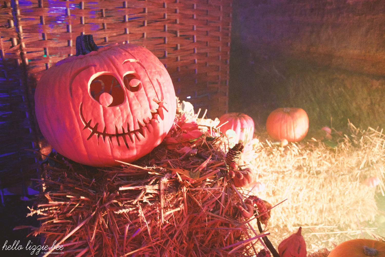 pumpkin patch, haunted hallows, halloween