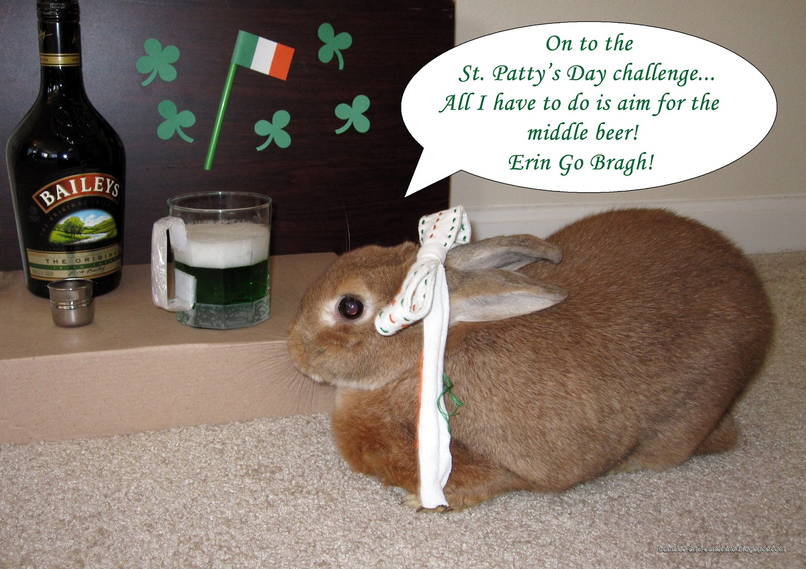 Bunnies And Sunshine I Think My Rabbit May Have A Drinking Problem