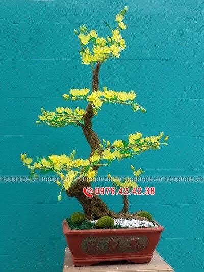 Goc bonsai cay hoa mai tai Duong Quang Ham