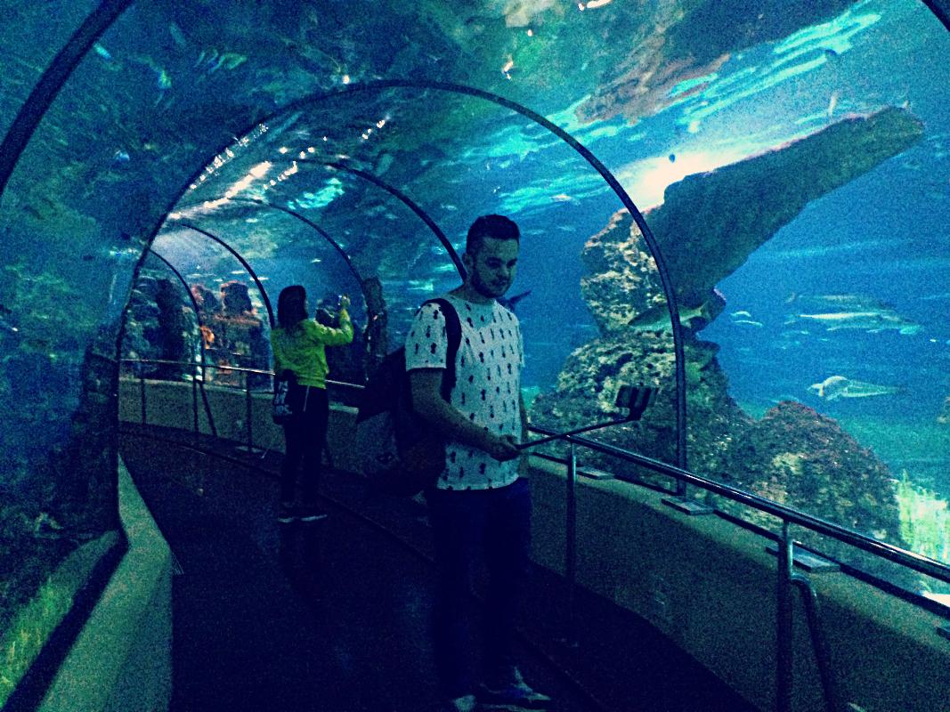 Oceanarium w Barcelonie & selfie