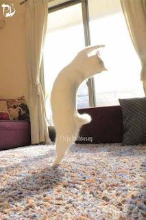 وضع كاميرا يراقب قطته و خرج وهذا ما اكتشفه عندما رجع.. لن تصدق  !!😶