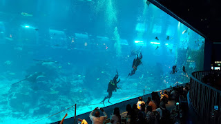 Diving in sea aquarium