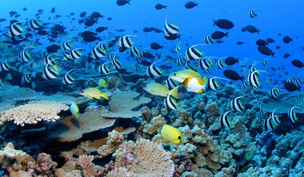 Protecting diversity on coral reefs: DNA may hold the key