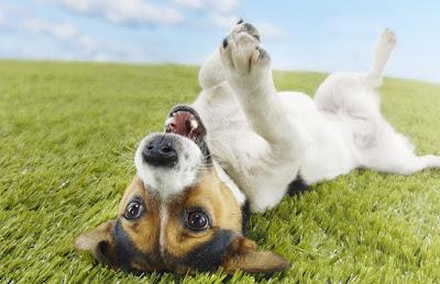 No sobrealimentes tu perro