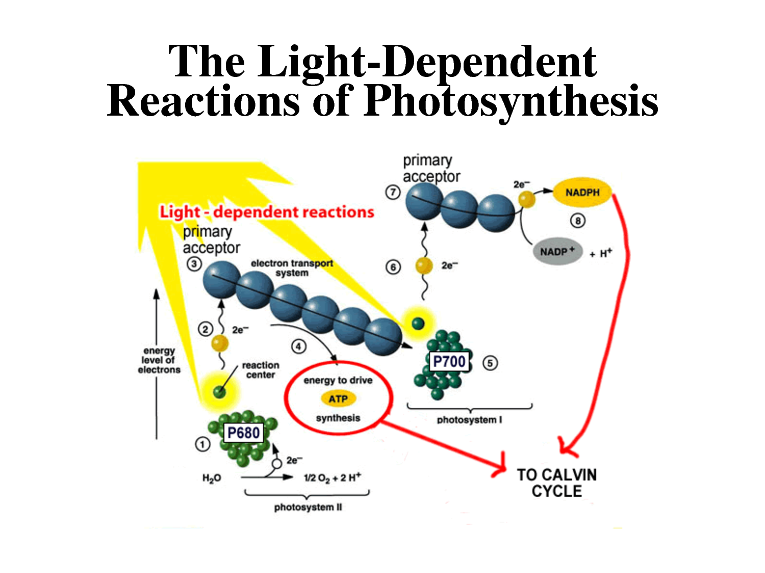 Photosynthesis May