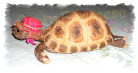 черепаха из шерсти