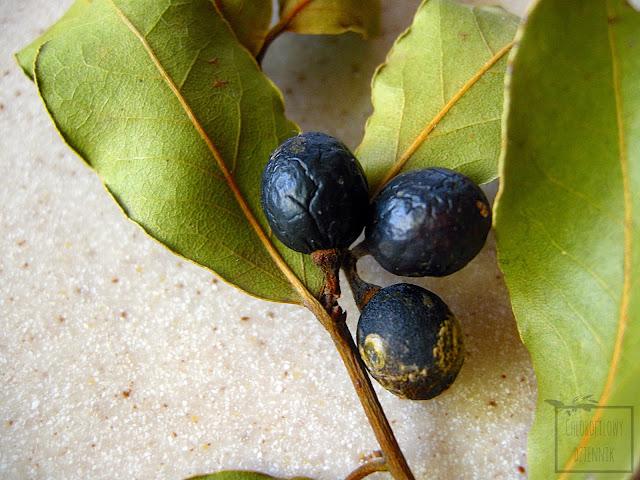 Liść laurowy, wawrzyn szlachetny, liść bobkowy owoce. Laurus nobilis