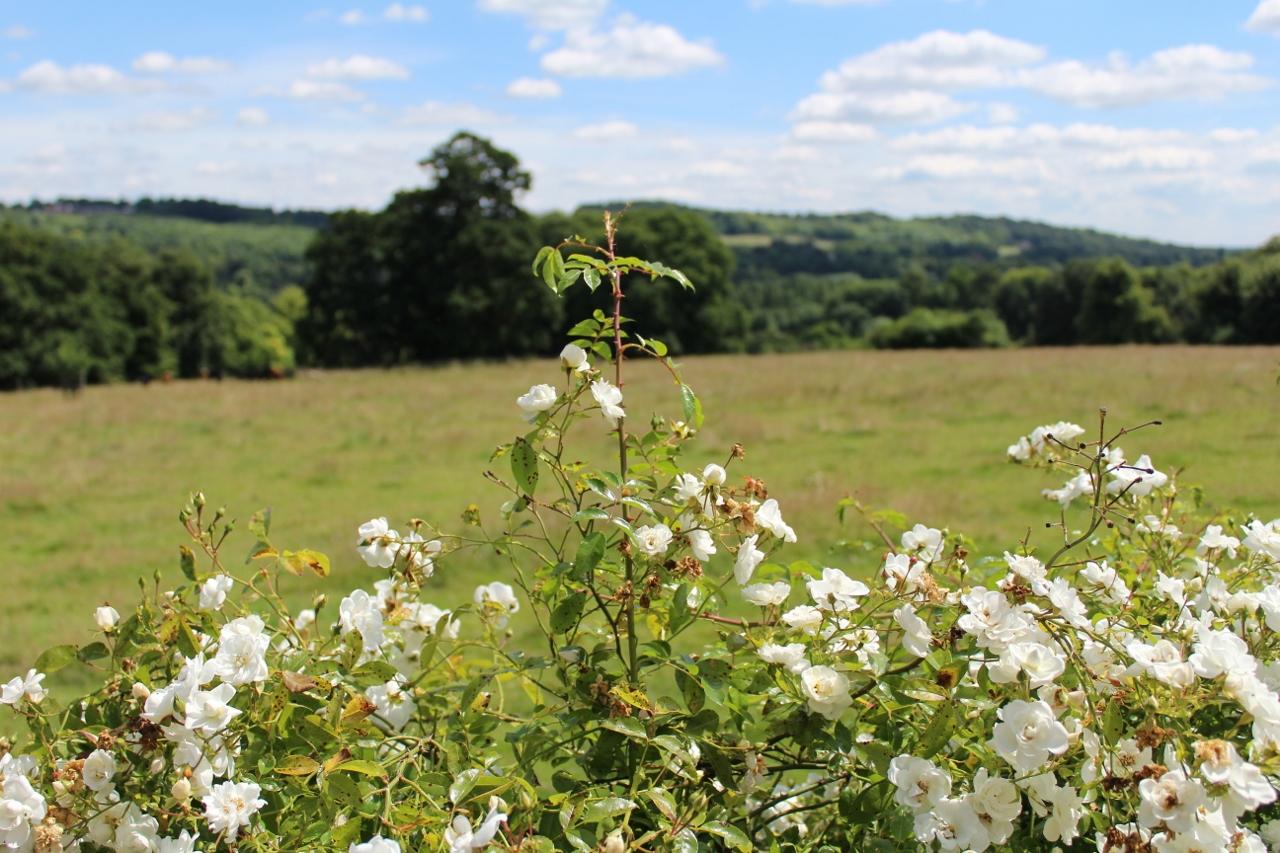 Countryside views from Basildon Park