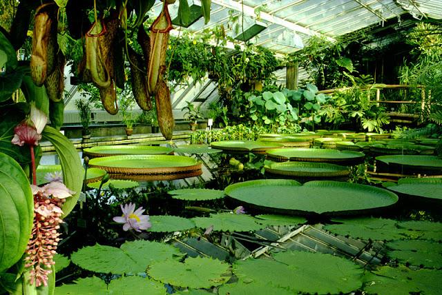 Botanischer Garten em Berlim