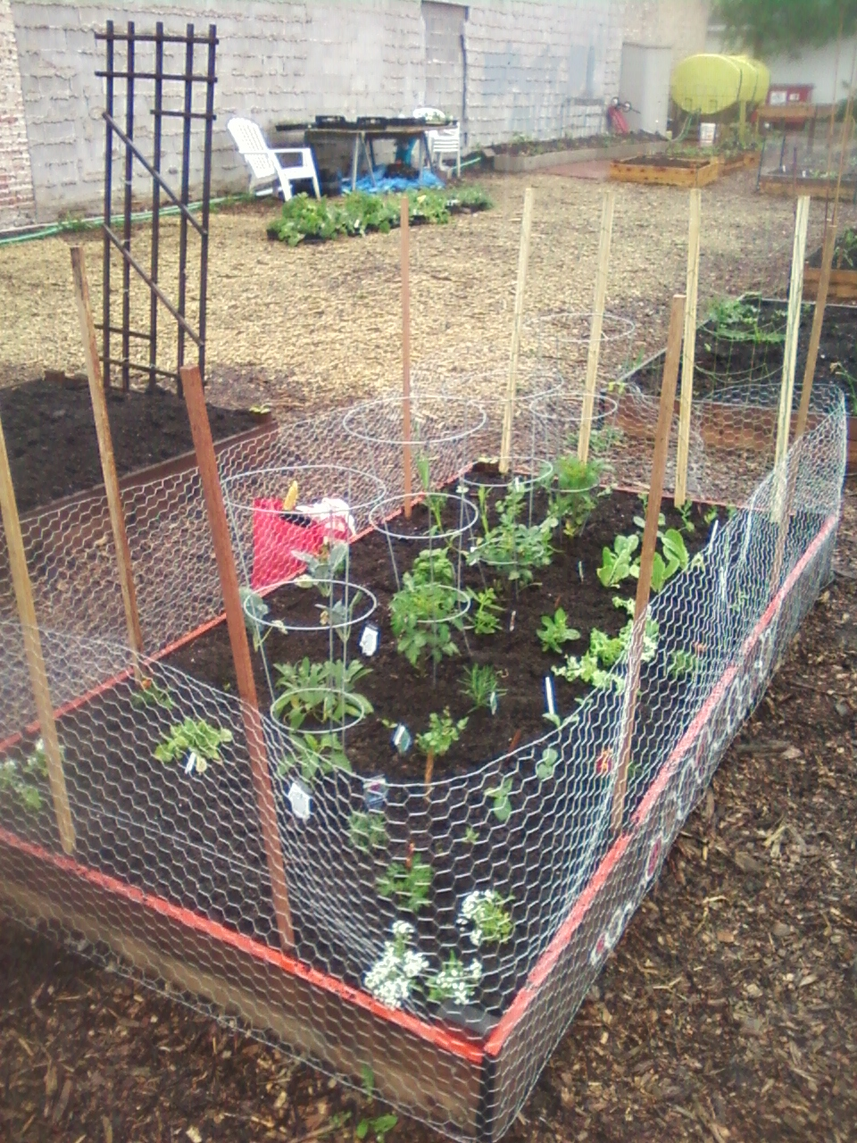 My 4x8 Building A Rabbit Proof Fence And A Pea Trellis