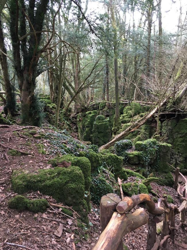 Puzzlewood Woodland scene