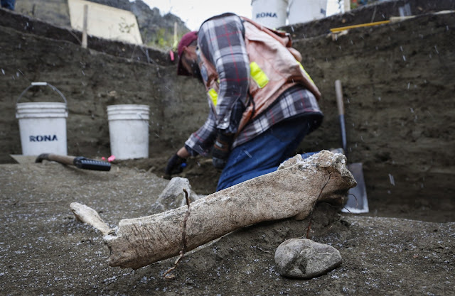 Bones, tools unearthed by Alberta flood could fill gaps in First Nations history