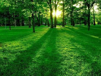 Trồng cây xanh giúp tạo bầu không khí trong lành nơi ở và nơi làm việc