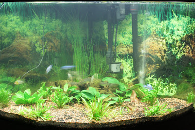 My So Called Life The Fish Tank