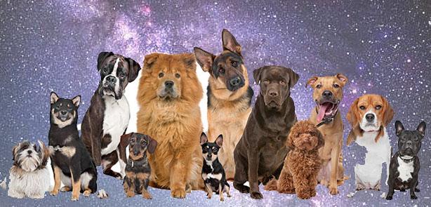 Un día de perros en la Vía Láctea