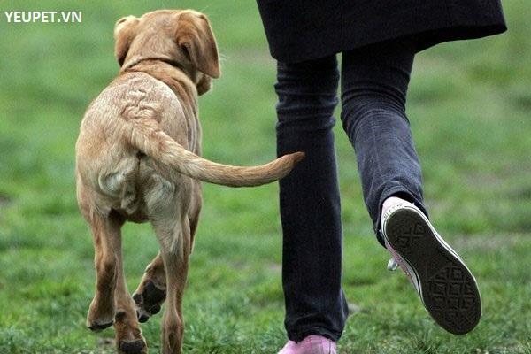Chó vẫy đuôi để làm gì?