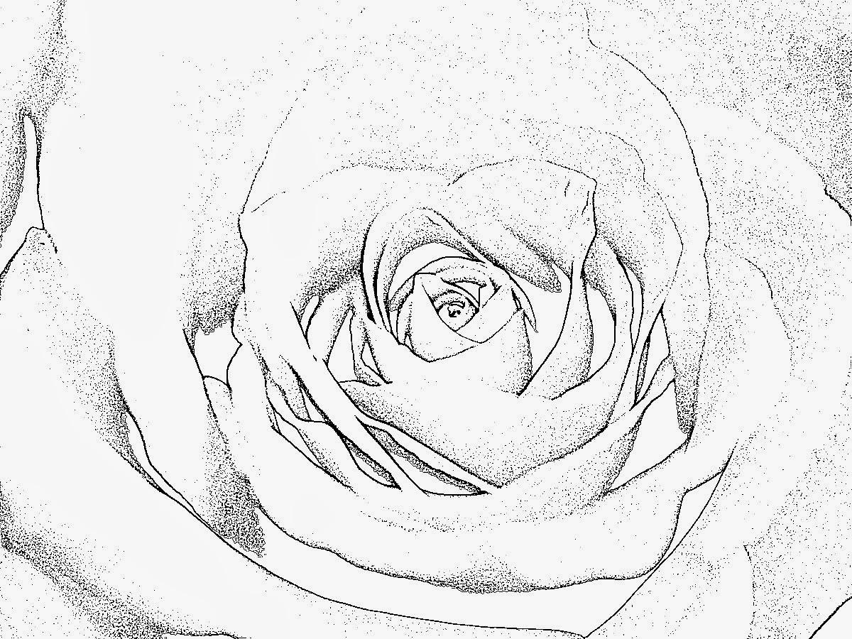 malvorlagen gratis  rosen malvorlagen