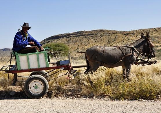 Contoh Cerita Anak tentang Keledai dalam Bahasa Inggris Beserta Pesan Moralnya