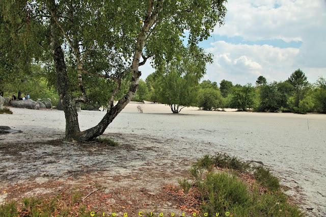 La plage de sable du Cul de Chien, Trois Pignons, Fontainebleau.