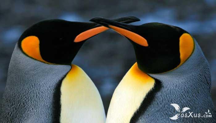 15 Burung Terbesar di Dunia Yang Masih Hidup Sampai Sekarang