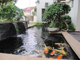taman kolam minimalis ikan koi