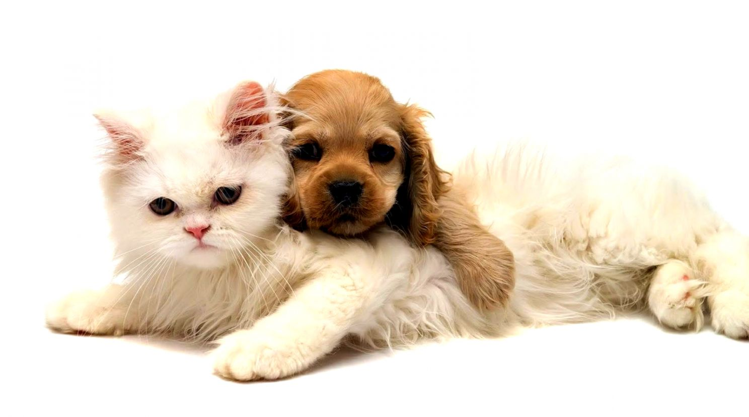 Cute Cat And Dog Wallpapers Hd Zedge Wallpapers