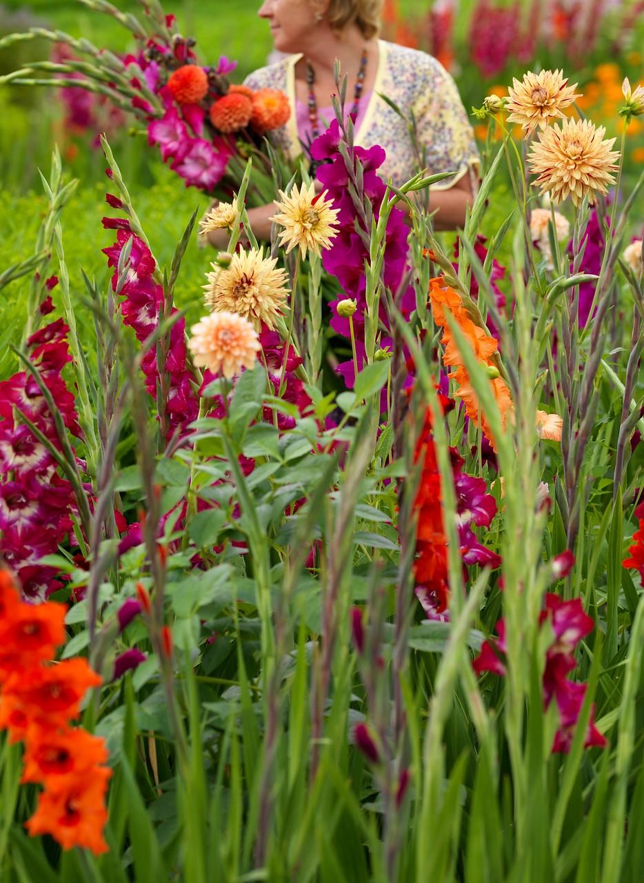 bulbos de verano en maceta o en el jardín para flor de corte