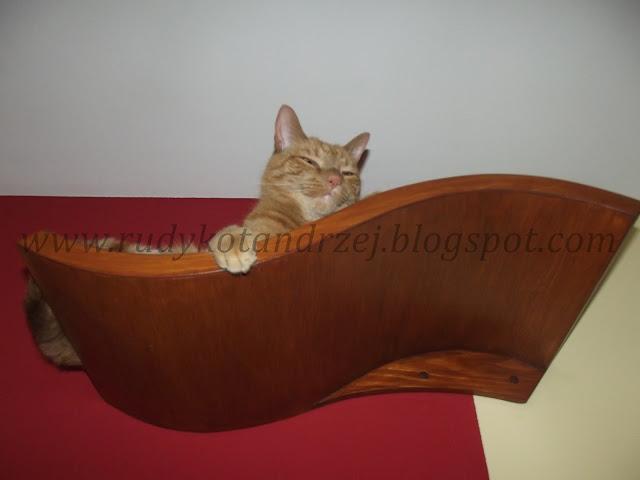 kot na półce