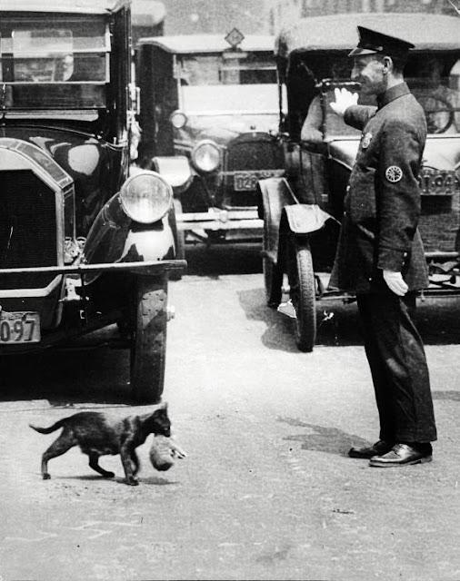 Parando el tráfico para gatos