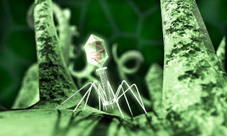 contoh soal dan pembahasan virus