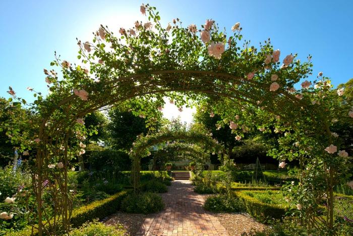 Stellenberg Gardens, arcos de rosas