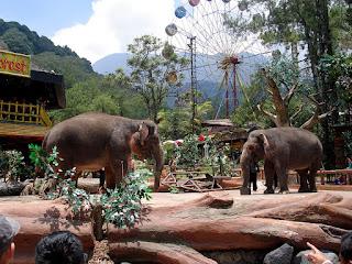 Elephant Show - Taman Safari Bogor